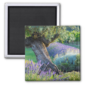 Garden scenic with flowers, France Square Magnet
