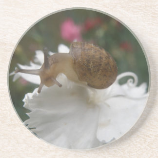Garden Snail and White Carnation Coasters