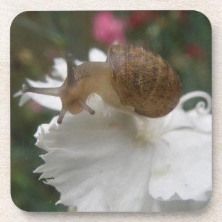 Garden Snail and White Carnation Cork Coaster