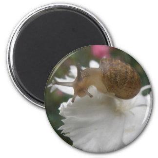 Garden Snail and White Carnation Magnet