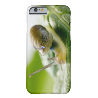 Garden snail on radish, California Barely There iPhone 6 Case