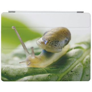 Garden snail on radish, California iPad Cover