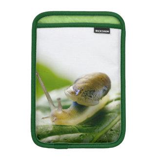 Garden snail on radish, California iPad Mini Sleeve