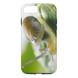 Garden snail on radish, California iPhone 8/7 Case