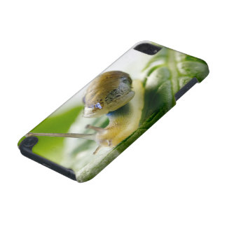 Garden snail on radish, California iPod Touch (5th Generation) Case