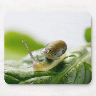 Garden snail on radish, California Mouse Mat