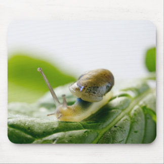 Garden snail on radish, California Mouse Pad