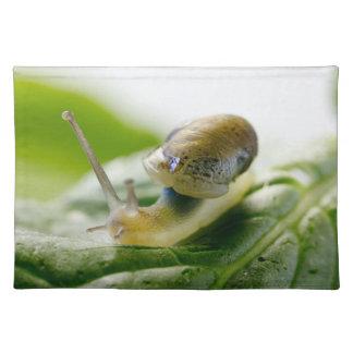 Garden snail on radish, California Placemat