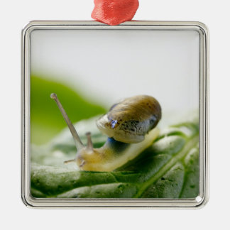 Garden snail on radish, California Silver-Colored Square Decoration