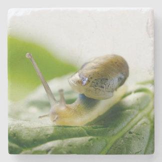 Garden snail on radish, California Stone Coaster