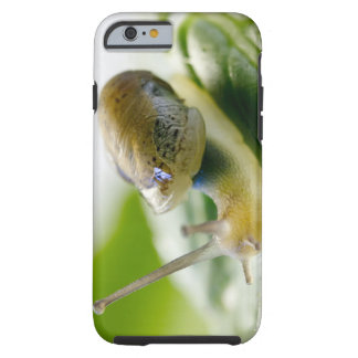 Garden snail on radish, California Tough iPhone 6 Case
