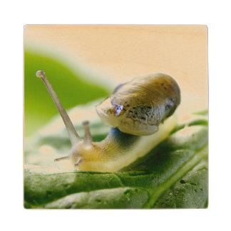 Garden snail on radish, California Wood Coaster