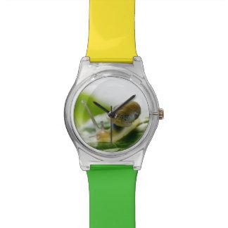 Garden snail on radish, California Wrist Watches