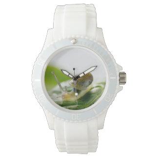 Garden snail on radish, California Wristwatch