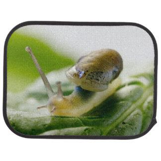 Garden snail on radish, California Floor Mat