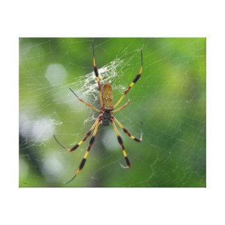 Garden Spider Canvas Prints