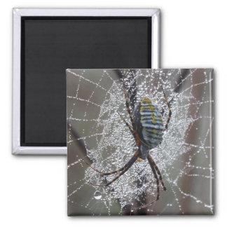 Garden Spider Covered in Dew Fridge Magnet