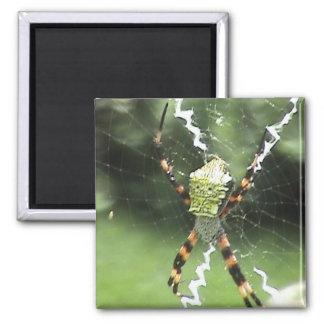 Garden Spider Magnet