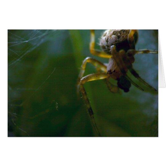 Garden Spider Notecard