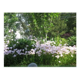 Garden State New Jersey, USA, America Photo Flower Postcard