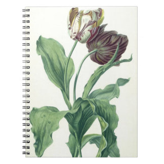 Garden Tulip, from 'Opera Botanica', engraved by L Notebooks