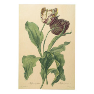 Garden Tulip, from 'Opera Botanica', engraved by L Wood Wall Art