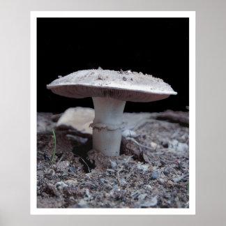 Garden Variey Mushroom Poster