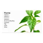 Gardener Bsiness Card Business Card