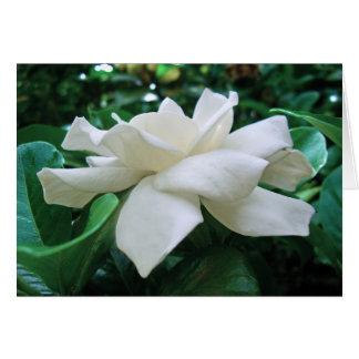 Gardenia Card