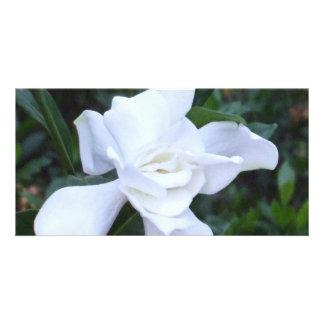 Gardenia Photo Cards