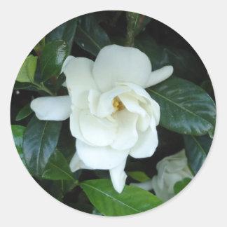 Gardenia Round Sticker