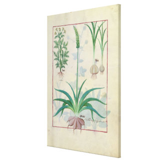 Garlic and other plants canvas print