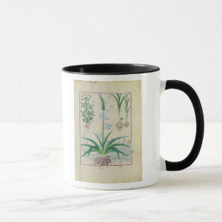 Garlic and other plants mug