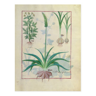 Garlic and other plants postcard
