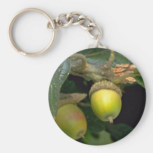 Gary oak tree fruit (quercus garryana) key chain