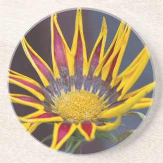 garzania gardenia flower in the garden coaster