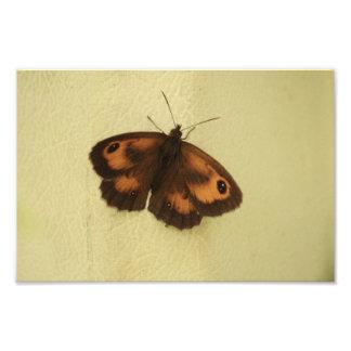Gatekeeper Butterfly In Shade Photo