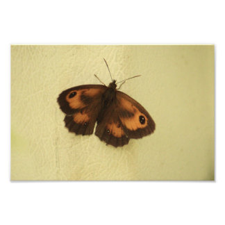 Gatekeeper Butterfly In Shade Photo Print