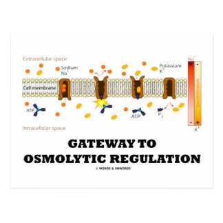 Gateway To Osmolytic Regulation Active Transport Postcard