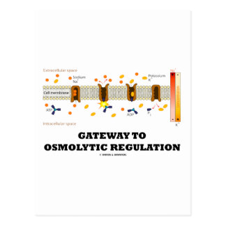 Gateway To Osmolytic Regulation Active Transport Post Cards