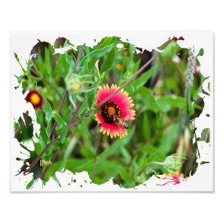 Gathering Nectar Photo Art