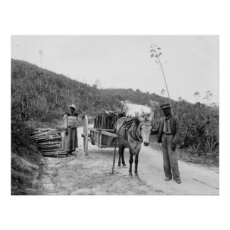 Gathering sisal, Nassau, Bahama Islands, c1900 Poster