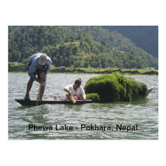 Gathering Watercress on Phewa Lake Postcard