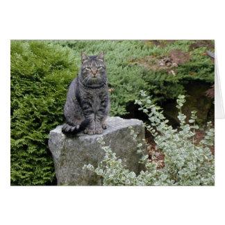 Gato = Cat Note Card
