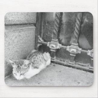 Gato de Argentina Mousepads