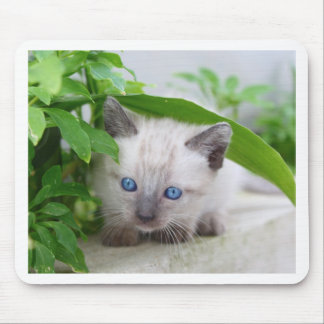 Gato Mousepad