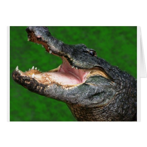 Gator Chomp Cards