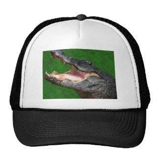 Gator Chomp Trucker Hats