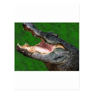 Gator Chomp Postcard