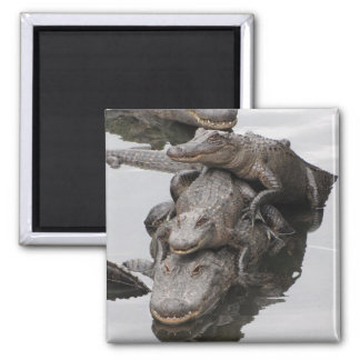 Gator Family Reunion Magnet